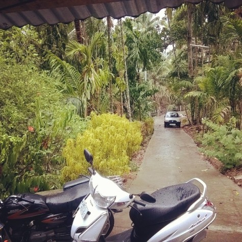 #fmsphotoaday #fmsphotoadaymay #fms_behind #may16 pic prompt for today is turn BEHIND and click a pic of what is behind u and for the love of home and nature and greenery that's the view behind my back cause it just started raining here in #andamans